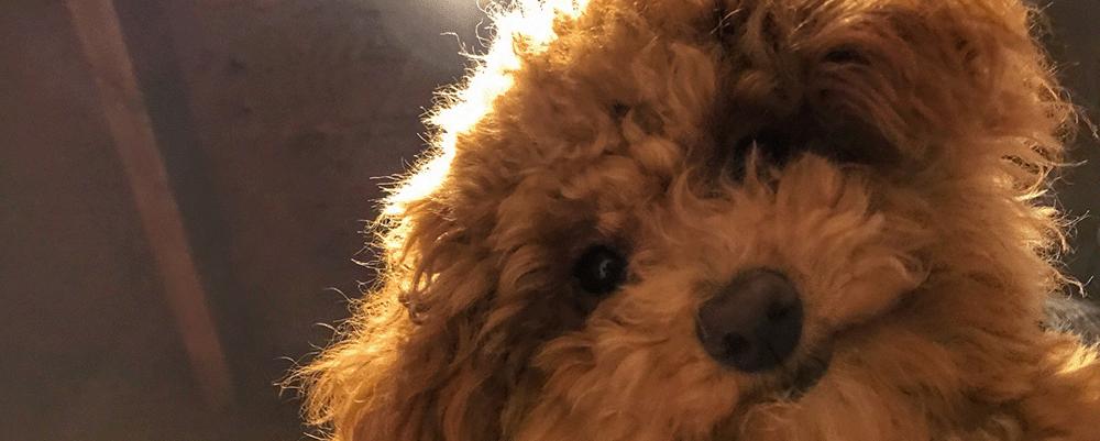 子犬の記念日