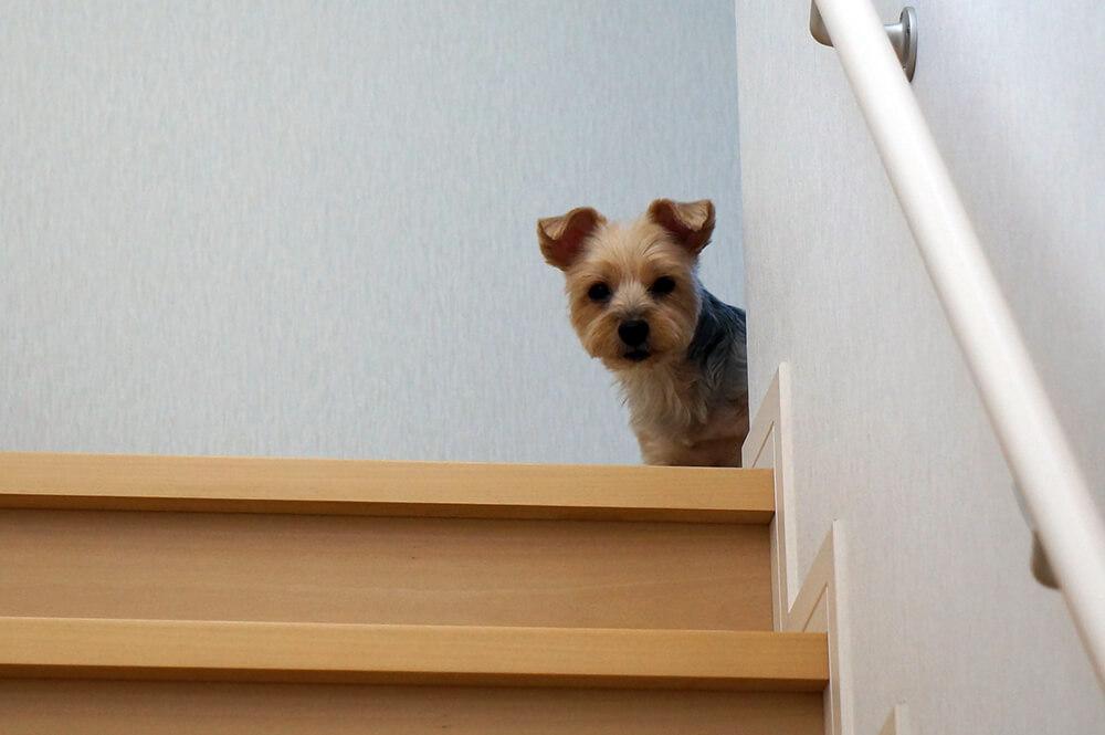 留守番の子犬