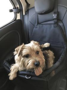 犬用ドライブボックス