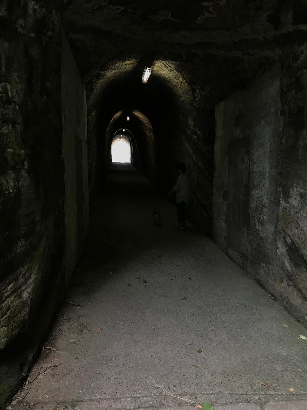 子犬の育て方 観音崎公園 トンネル 子犬