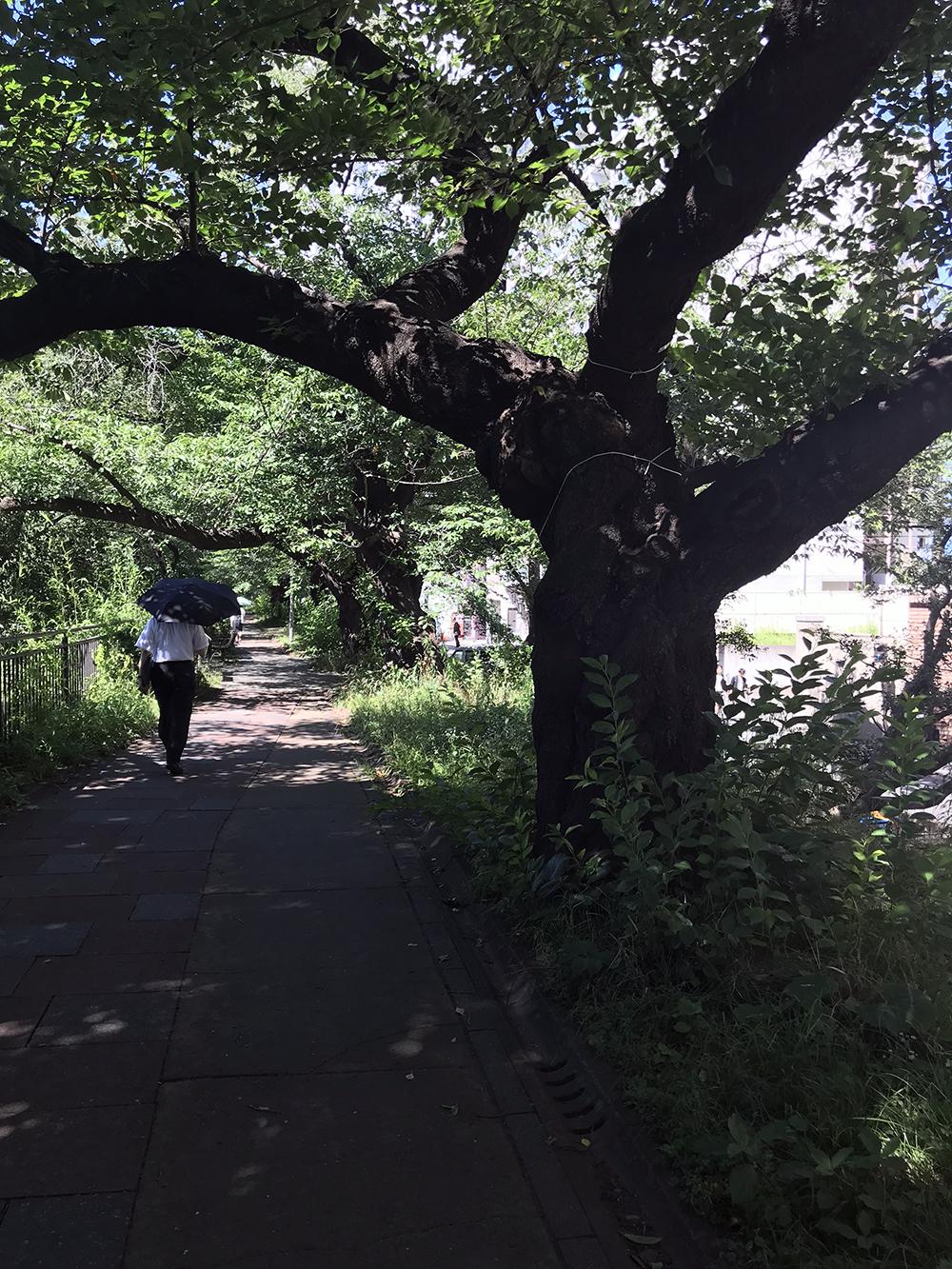 外濠公園内の木立に囲まれた道