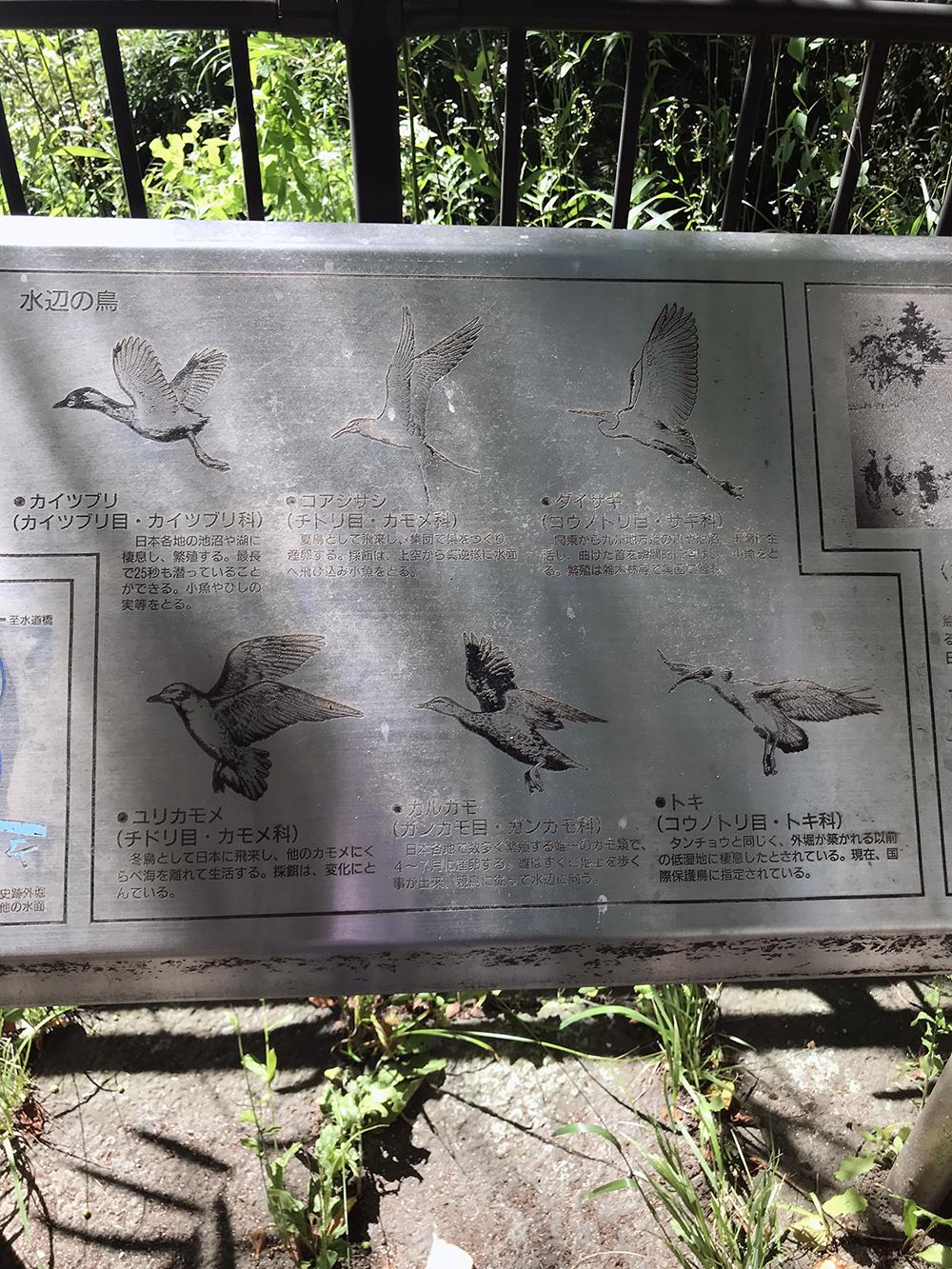 外濠公園に生息する鳥の標識
