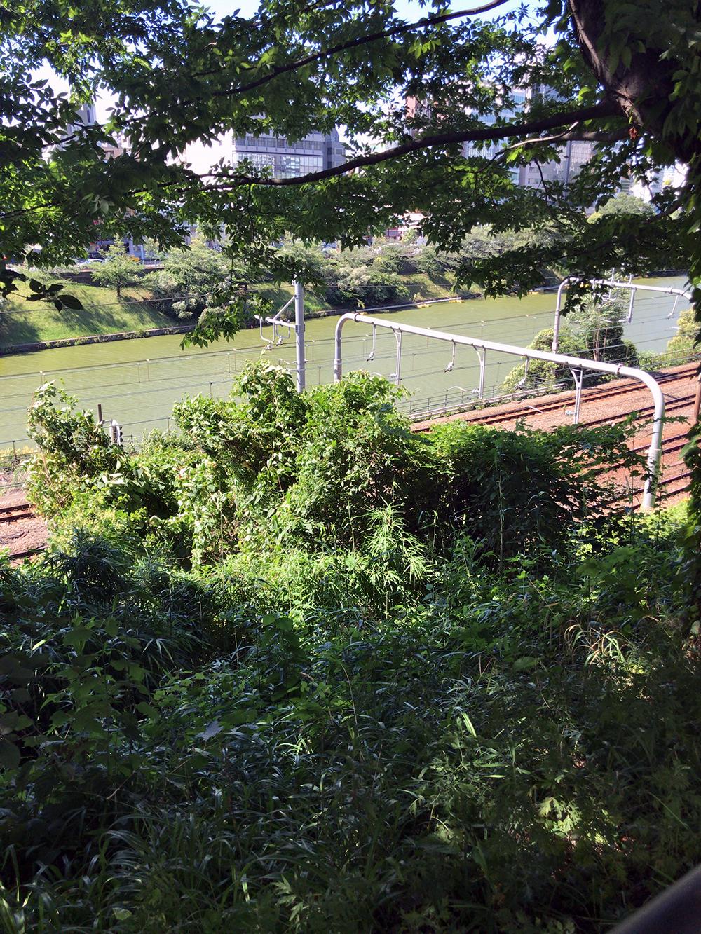 外濠公園から見るお堀