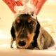 犬のニオイを消臭して、快適に暮らすいくつかの方法