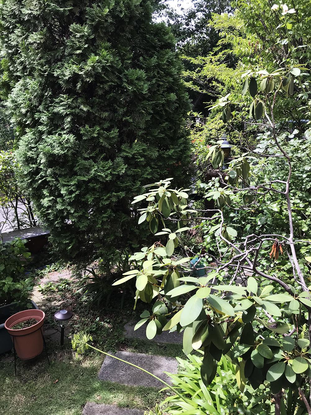 蚊の多そうな植え込みが多い庭