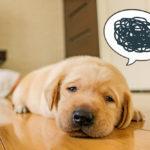 うつ病の犬