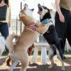 犬の問題行動をなんとかしたい!原因は?どうトレーニングしたらいいの?