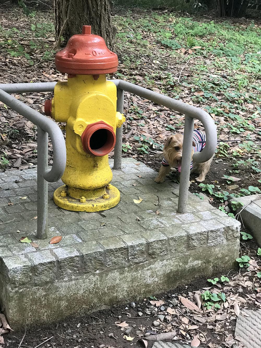 米軍置き土産 消火栓
