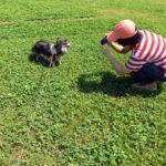 犬の写真を撮る