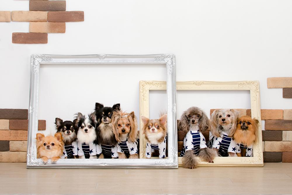 犬 写真フレーム