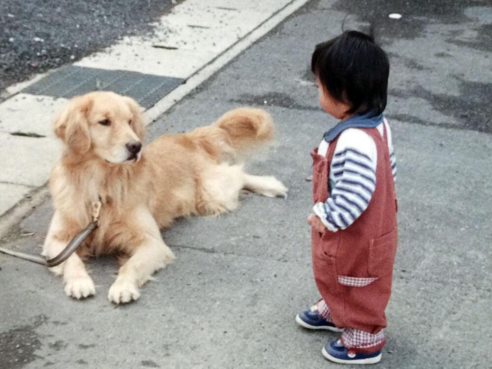 ラブラドールと挨拶する子供