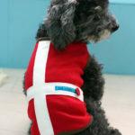 犬服を着る犬