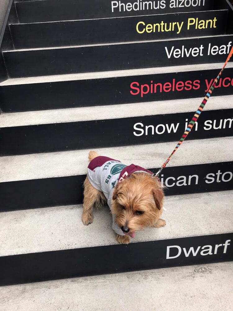 デザインされた階段にいるノーフォーク