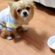 子犬がフードを食べなかったらどうしたらいい?