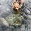 田代運動公園沿いの中津川に犬と行く 駐車場は河川敷