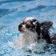 犬の熱中症予防! 症状やグッズを知っておこう!