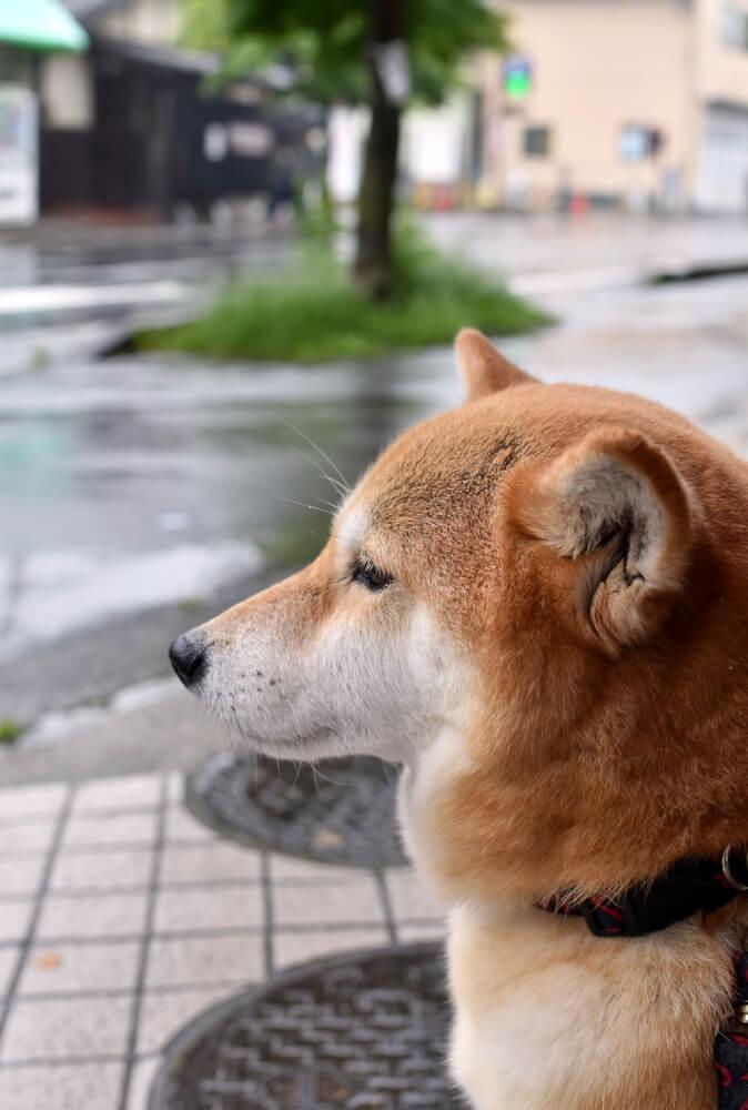 雨で散歩に行けない