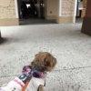 多摩南大沢アウトレット 犬と行くなら提携駐車場 食事も犬連れOK!