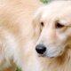 吠える犬種 吠えない犬種 性格を知っておこう 無駄吠えをさせないしつけ方