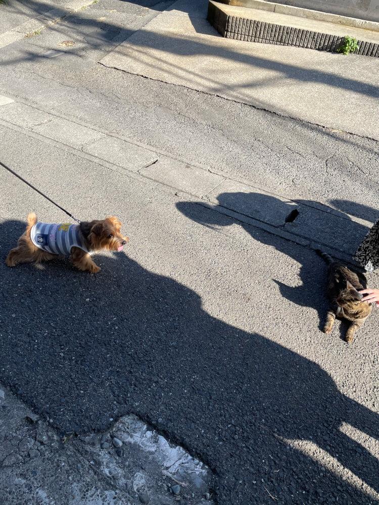 ノーフォークと猫